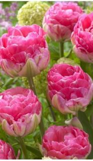 Ярко розовый