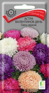 Астра Валентинов день Смесь окрасок
