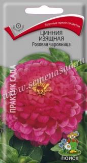 Розовая чаровница