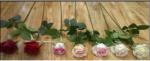 пишем в комментарии: малиновый,  красный,  темно- розовый,  персиковый,  светло- розовый,  шампань,  белый