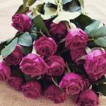 черный,  фиолетовый,  красный,  светло- розовый,  темно- розовый,  оранжевый,  зеленый,  желтый,  шампань,  белый
