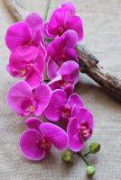 бело- розовый,  белый  (розовая  сердцевина),  белый  (желтая  сердцевина),  фуксия,  фуксия- леопард,  синий,  фиолетовый