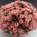 цветение 6 недель