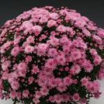 цветение 7 недель