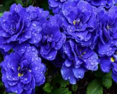 -Cobalt Blue