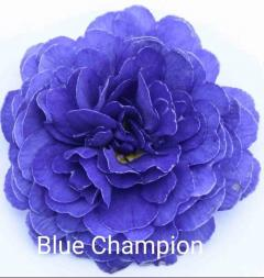 -Blue Champion