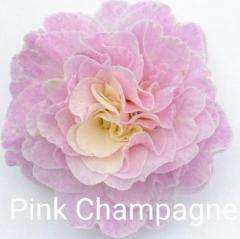 -Pink Champagne