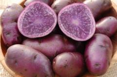 -Фиолетовый среднепоздний, суперэлит, сертифицирован