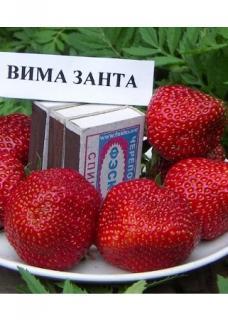 -Вима Занта (ранняя)